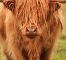 Highland Cow in Scotland Sticker