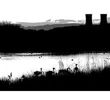 Swans 2 Photographic Print