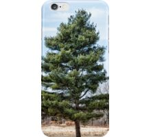 early spring pine iPhone Case/Skin