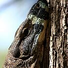 Monitor Lizard by Martin How