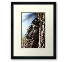 Monitor Lizard Framed Print