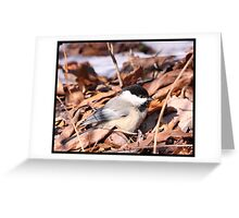 Black-capped Chicadee Greeting Card
