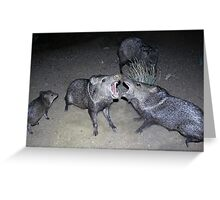 Javelina Harmony Greeting Card