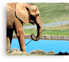 Lets Go Fishing With Elephants Canvas Print