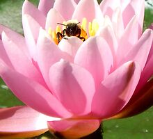 Bee with Lotus by DomaniDream