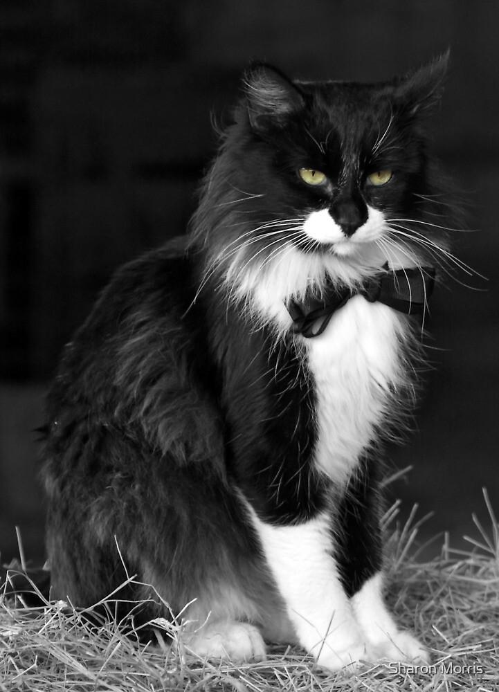 Tuxedo Kitty by Sharon Morris