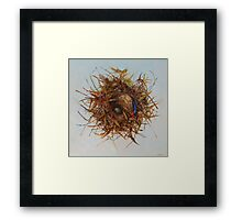 The Blue Feather Framed Print