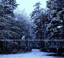 Snow Bathed in Blue Light  by Rick  Todaro