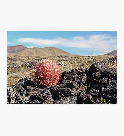 Ferocactus on lava Photographic Print