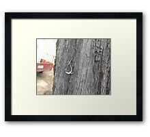 Skinks Fighting  Framed Print