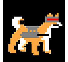 pixel doge Photographic Print