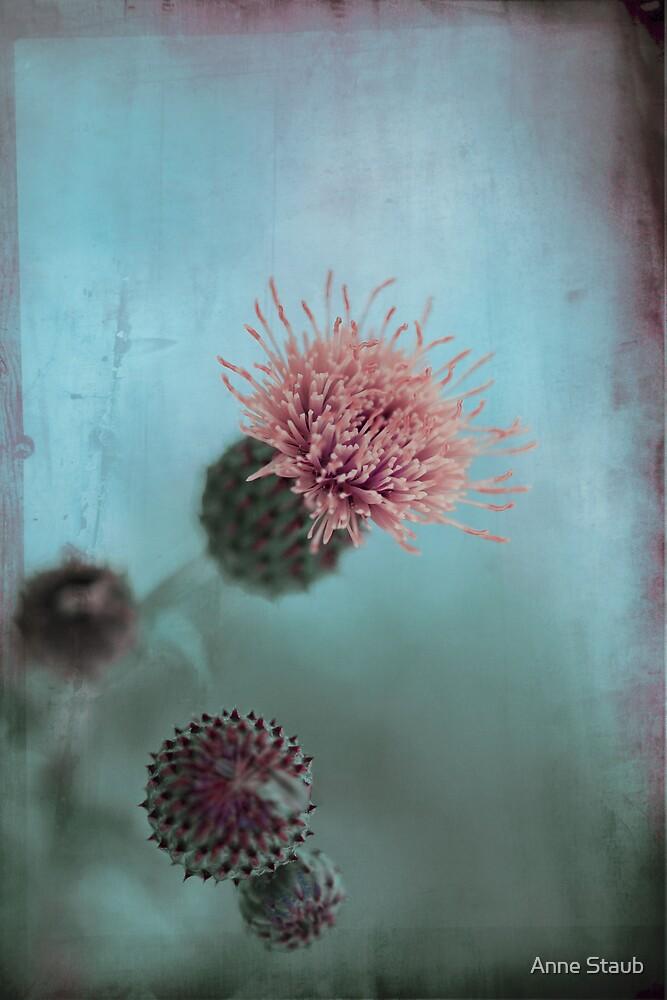 Pale Pink by Anne Staub