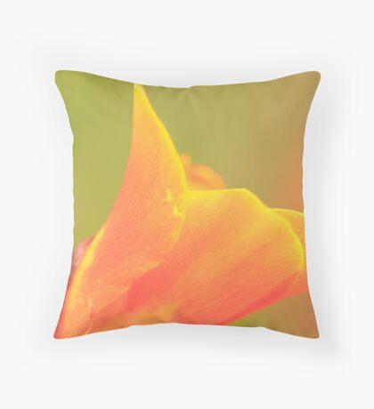 Canna x generalis cv. Throw Pillow