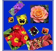 Crazy Summer Flowers Collage Photographic Print