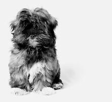 Lola Dog by irisphotoart