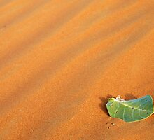 All alone ! , Ras Al Khaimah, UAE  by mojgan