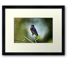 Blue Bird Pose Framed Print