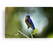Blue Bird Pose Canvas Print