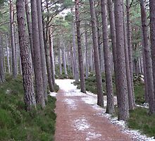 Forest Path by Mike Paget