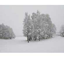 Winter Trees Photographic Print