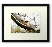 Cute Furry Owl  Framed Print