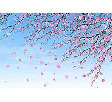 Cherry Blossoms Blue Sky Photographic Print