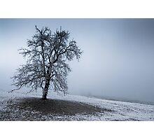 dark winter tree Photographic Print
