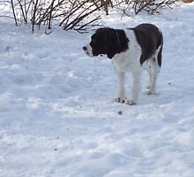 dog in snow 2 by sianteri