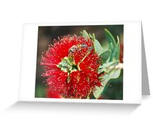 Miniture Brush Greeting Card