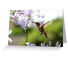 Tiny Hummer Greeting Card