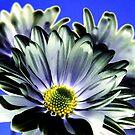 ~daisies~ by Terri~Lynn Bealle