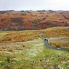 Winter Walk by Harry Oldmeadow