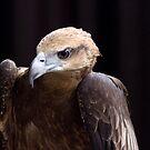 portrait of a hawk by richardseah