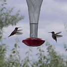 Hummingbirds Suspended by urmysunshine