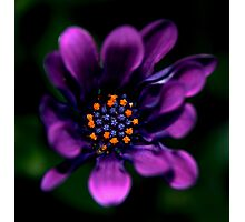 Deep in the Colour Purple Photographic Print