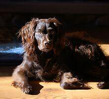 Dog's World by Jane Best