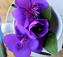 For All The T In Tibouchina by Michael May