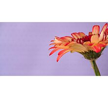 FLOWER Photographic Print