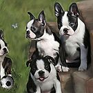 Boston Terrier Puppies.... by Cazzie Cathcart