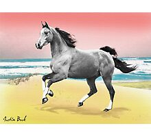 Beach Horse Justin Beck Picture 2015081 Photographic Print