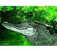 Croc Justin Beck Picture 2015084 Photographic Print