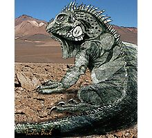 Desert Iguana Justin Beck Picture 2015096 Photographic Print