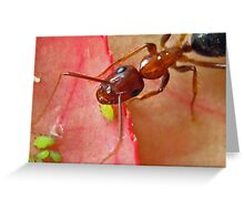 The Ant and the Aphids Greeting Card