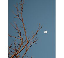 Tree Limb Moon~ Photographic Print