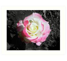 Rose :: Colorized Art Print