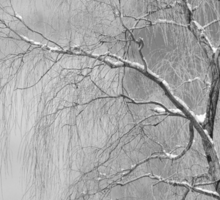 Winter Journeys no.28: Snow On The Tree Branches Sticker