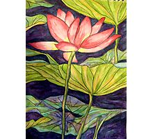 Lily/Lotus - Watercolour Pencil Photographic Print