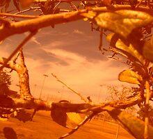 Orange Window by Jameson Haynes
