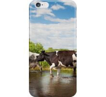 Cows walking across puddle iPhone Case/Skin