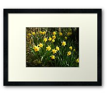 Double Daffodils Framed Print